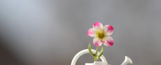 Giesskanne mit Blume